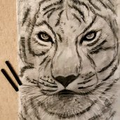 Drawing of a Tiger